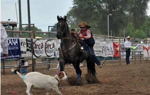 Wylee Mitchell competes in an event in the National Little Britches Rodeo Asso-ciation in Pueblo, Colo. last month.