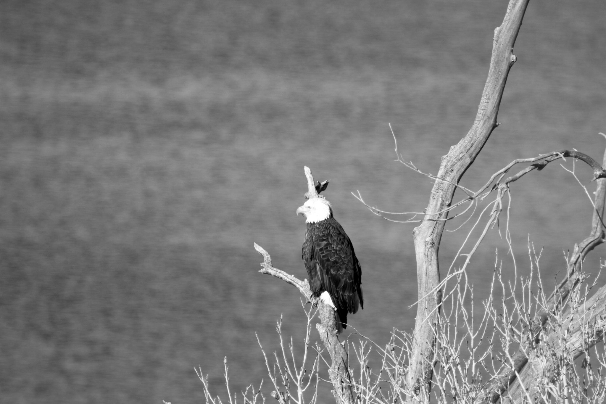 Eagle Watch held at the Pahranagat Wildlife Refuge