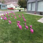 Flamingos Raise Money for PTO