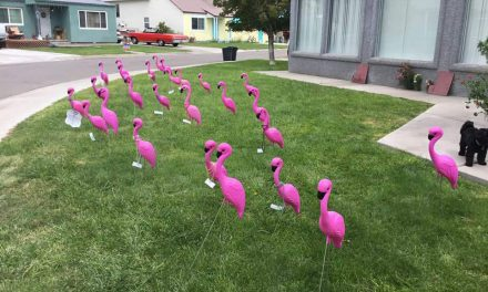Flamingos Raise Money for PTO