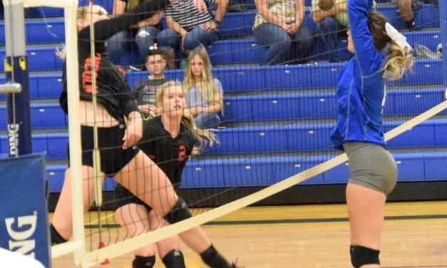 Panthers Sweep Lynx